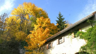 Рекомендации по нанесению фасадных материалов осенью